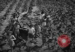 Image of National Tobacco festival 1940 South Boston Virginia USA, 1940, second 10 stock footage video 65675046153