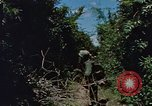 Image of Marine Forces Vietnam, 1967, second 3 stock footage video 65675046346