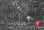 Image of fighting dog Bougainville Island Papua New Guinea, 1944, second 3 stock footage video 65675046502
