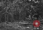 Image of fighting dog Bougainville Island Papua New Guinea, 1944, second 6 stock footage video 65675046502