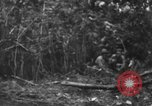 Image of fighting dog Bougainville Island Papua New Guinea, 1944, second 7 stock footage video 65675046502