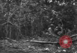 Image of fighting dog Bougainville Island Papua New Guinea, 1944, second 8 stock footage video 65675046502