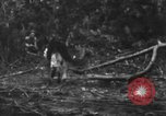 Image of fighting dog Bougainville Island Papua New Guinea, 1944, second 12 stock footage video 65675046502
