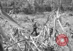 Image of 145th Infantry Regiment Solomon Islands, 1944, second 1 stock footage video 65675046506
