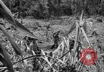 Image of 145th Infantry Regiment Solomon Islands, 1944, second 2 stock footage video 65675046506