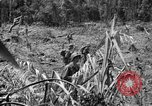 Image of 145th Infantry Regiment Solomon Islands, 1944, second 5 stock footage video 65675046506