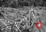Image of 145th Infantry Regiment Solomon Islands, 1944, second 7 stock footage video 65675046506