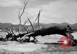 Image of Atomic bomb Japan, 1945, second 13 stock footage video 65675046528