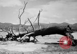Image of Atomic bomb Japan, 1945, second 14 stock footage video 65675046528