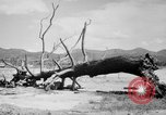 Image of Atomic bomb Japan, 1945, second 15 stock footage video 65675046528