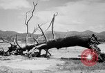 Image of Atomic bomb Japan, 1945, second 17 stock footage video 65675046528