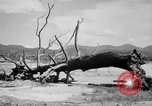 Image of Atomic bomb Japan, 1945, second 18 stock footage video 65675046528