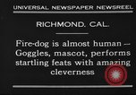 Image of fire dog Richmond California USA, 1930, second 2 stock footage video 65675046582