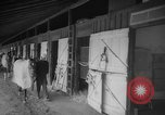 Image of horse Kelso Laurel Maryland USA, 1964, second 3 stock footage video 65675046614
