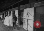 Image of horse Kelso Laurel Maryland USA, 1964, second 4 stock footage video 65675046614
