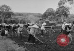 Image of civil life Vietnam, 1962, second 11 stock footage video 65675046655
