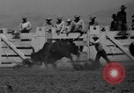Image of Annual California Rodeo Salinas California USA, 1939, second 9 stock footage video 65675046710