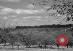 Image of cherry festival Traverse City Michigan USA, 1939, second 4 stock footage video 65675046712