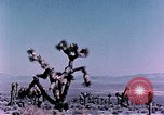 Image of Fiezeau nuclear test Nye County Nevada USA, 1957, second 6 stock footage video 65675046805