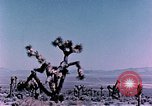 Image of Fiezeau nuclear test Nye County Nevada USA, 1957, second 7 stock footage video 65675046805