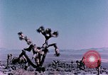 Image of Fiezeau nuclear test Nye County Nevada USA, 1957, second 9 stock footage video 65675046805
