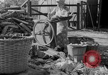Image of corn sheller United States USA, 1945, second 3 stock footage video 65675046824