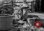 Image of corn sheller United States USA, 1945, second 4 stock footage video 65675046824