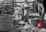 Image of corn sheller United States USA, 1945, second 12 stock footage video 65675046824