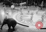 Image of Spring circus New York City USA, 1956, second 8 stock footage video 65675046952