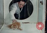 Image of behavior of cats United States USA, 1957, second 9 stock footage video 65675047218