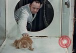 Image of behavior of cats United States USA, 1957, second 10 stock footage video 65675047218
