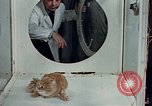 Image of behavior of cats United States USA, 1957, second 11 stock footage video 65675047218