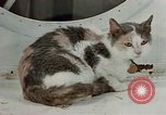 Image of behavior of cats United States USA, 1957, second 6 stock footage video 65675047224