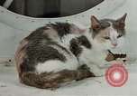 Image of behavior of cats United States USA, 1957, second 7 stock footage video 65675047224