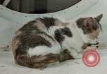 Image of behavior of cats United States USA, 1957, second 9 stock footage video 65675047224