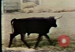 Image of Animal mind control experiments United States USA, 1979, second 9 stock footage video 65675047246