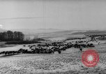 Image of herd of cattle Canada, 1959, second 6 stock footage video 65675047257