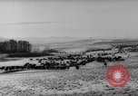 Image of herd of cattle Canada, 1959, second 7 stock footage video 65675047257