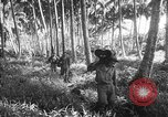Image of United States troops New Guinea, 1943, second 6 stock footage video 65675047524