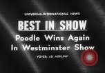 Image of poodle wins the dog show New York United States USA, 1961, second 1 stock footage video 65675047741