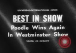 Image of poodle wins the dog show New York United States USA, 1961, second 2 stock footage video 65675047741