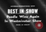 Image of poodle wins the dog show New York United States USA, 1961, second 4 stock footage video 65675047741