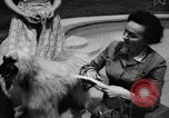 Image of dog parade Seattle Washington USA, 1956, second 9 stock footage video 65675047749