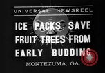 Image of dry fruit tress Montezuma Georgia USA, 1937, second 2 stock footage video 65675047803