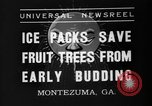 Image of dry fruit tress Montezuma Georgia USA, 1937, second 4 stock footage video 65675047803
