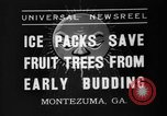 Image of dry fruit tress Montezuma Georgia USA, 1937, second 7 stock footage video 65675047803