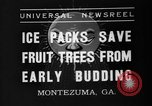 Image of dry fruit tress Montezuma Georgia USA, 1937, second 10 stock footage video 65675047803