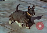 Image of Adolf Hitler's dogs Berchtesgaden Germany, 1940, second 1 stock footage video 65675047969