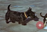 Image of Adolf Hitler's dogs Berchtesgaden Germany, 1940, second 4 stock footage video 65675047969