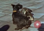 Image of Adolf Hitler's dogs Berchtesgaden Germany, 1940, second 10 stock footage video 65675047969